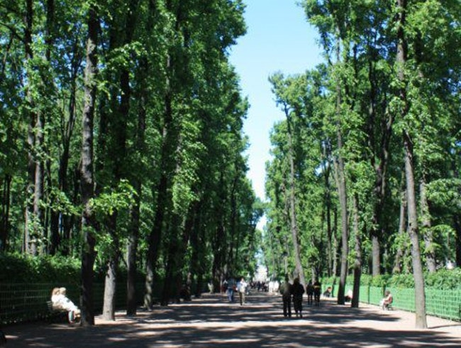Trees that have been around since Catherine the Great.
