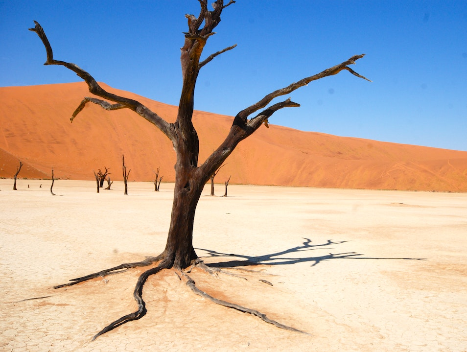 The Haunting Tree Fossils of Dead Vlei Hardap  Namibia