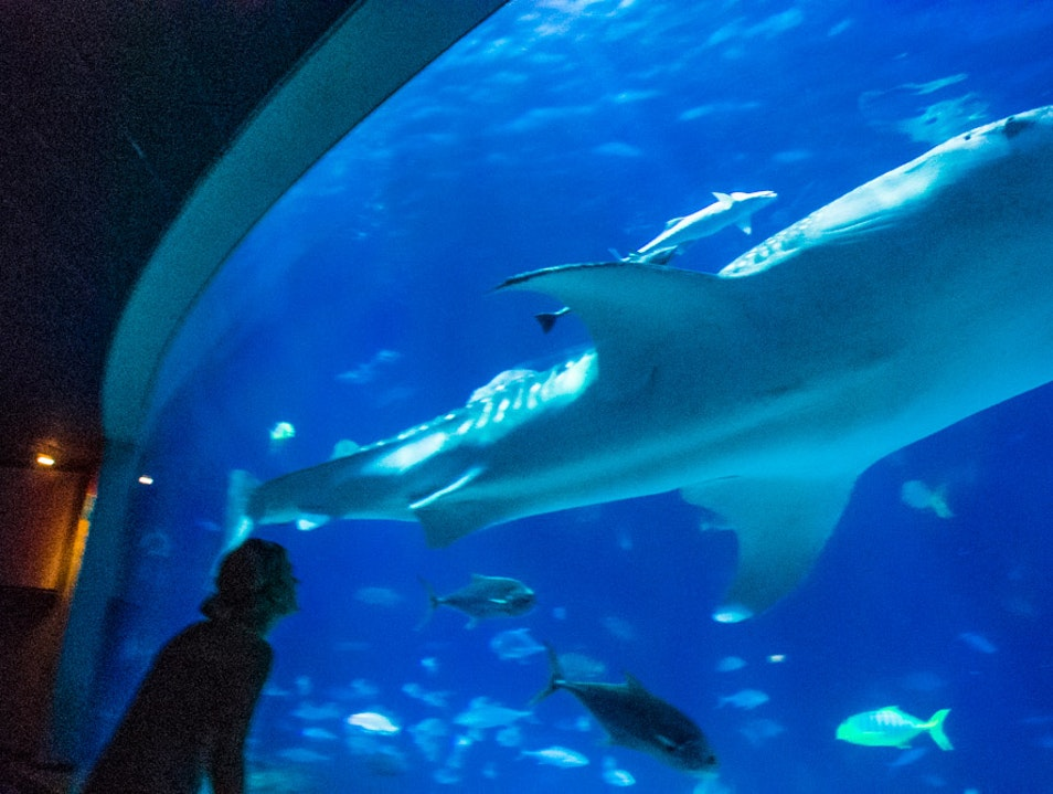 Explore the Ocean in Taiwan's Largest Aquarium Checheng Township  Taiwan