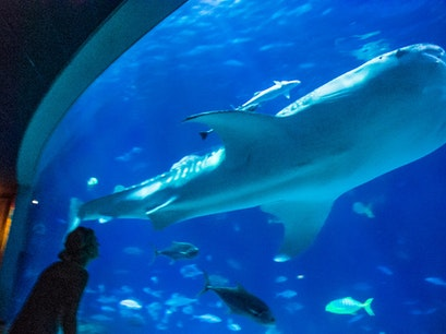 National Museum of Marine Biology and Aquarium Checheng Township  Taiwan