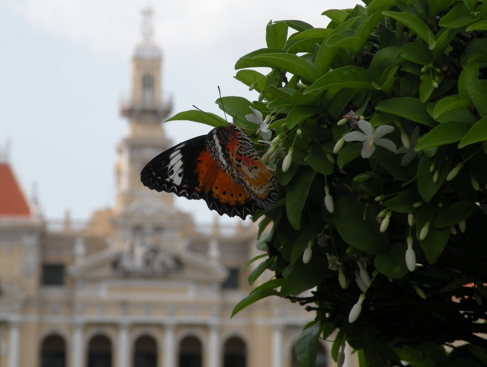 Reunification with butterfly Ho Chi Minh City  Vietnam