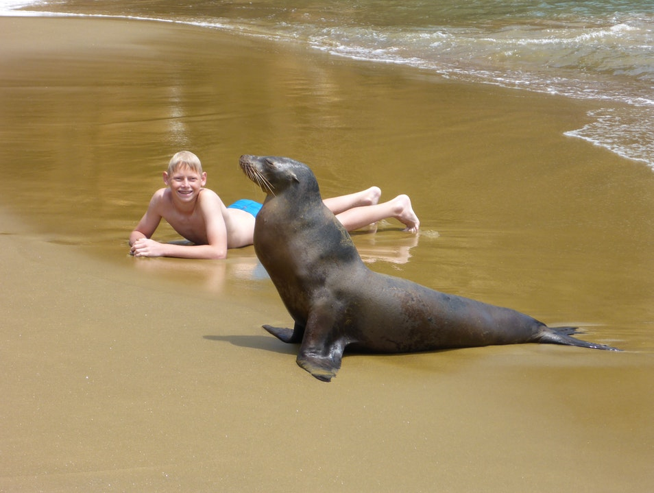 Sea Lions up close in the Galapagos