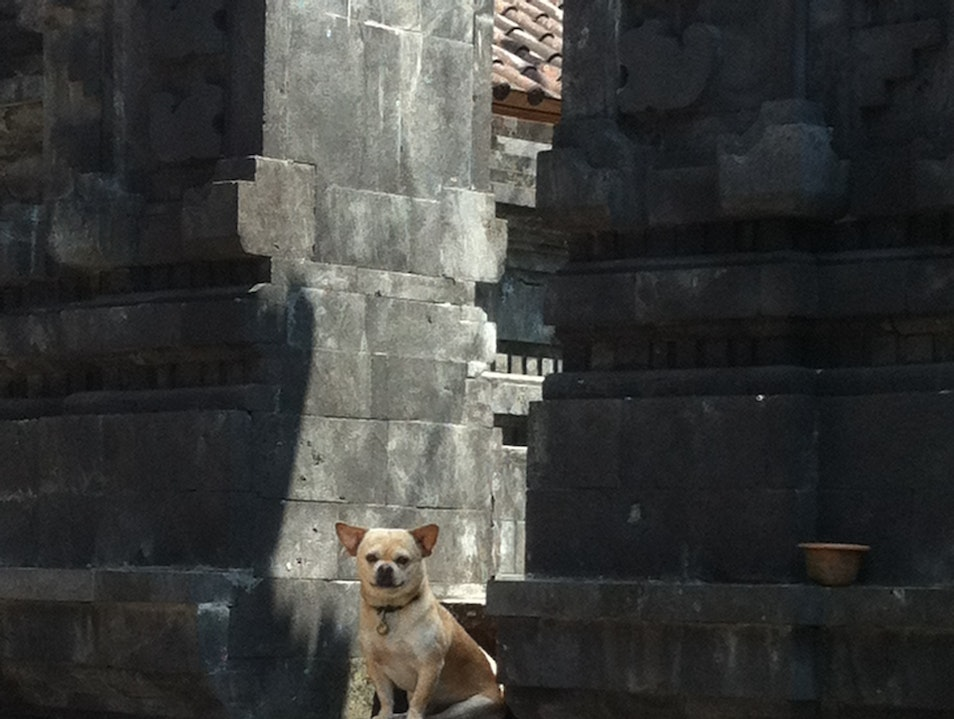Temple Dog  Kuta  Indonesia