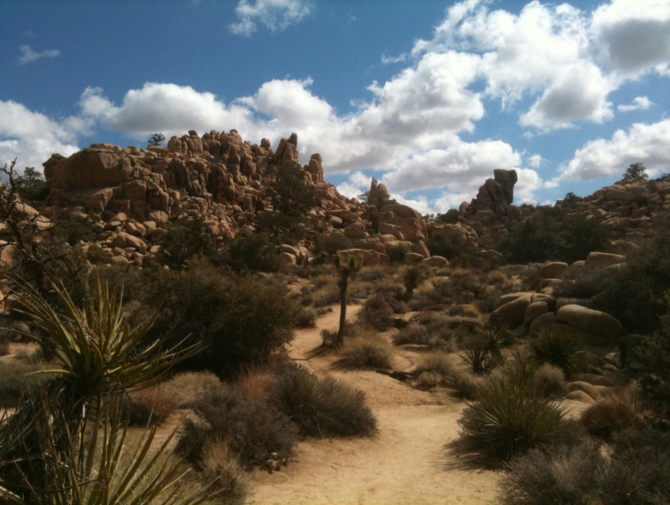 Joshua Tree Provides Adrenaline Rush With Its Beauty Twentynine Palms California United States