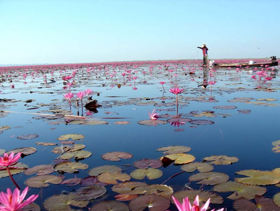 A boat trip on the Red Lotus Sea