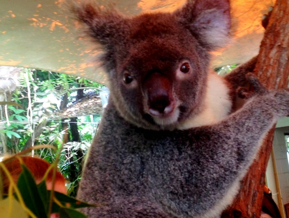 The Best Zoo in North Queensland: Cairns Tropical Zoo  Palm Cove  Australia