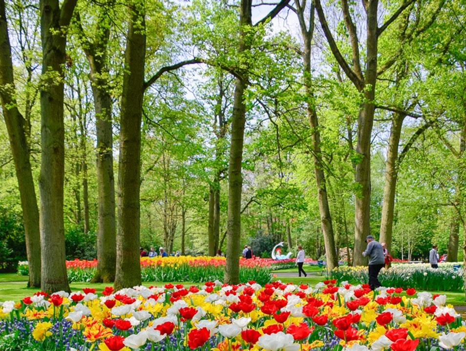 The world's most beautiful garden Lisse  The Netherlands
