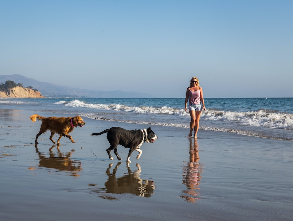 Dog's Day Out: Summerland Beach Summerland California United States