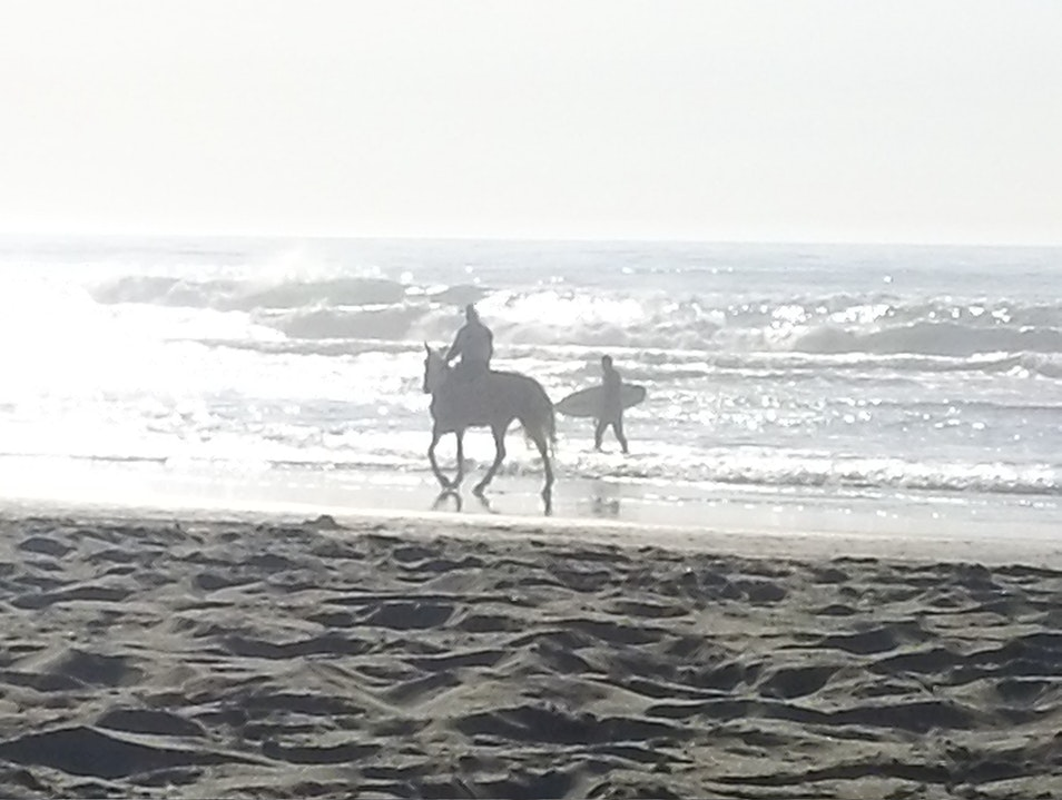 The Surf brings Riders of Boards and Horse!