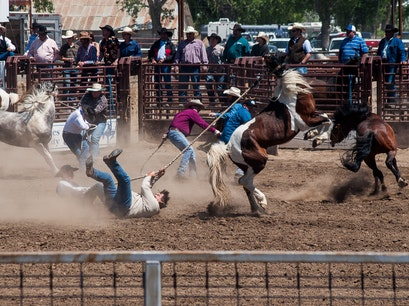 Miles City Bucking Horse Sale Miles City Montana United States