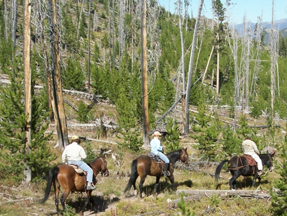 Horseback Tripping in Big Sky