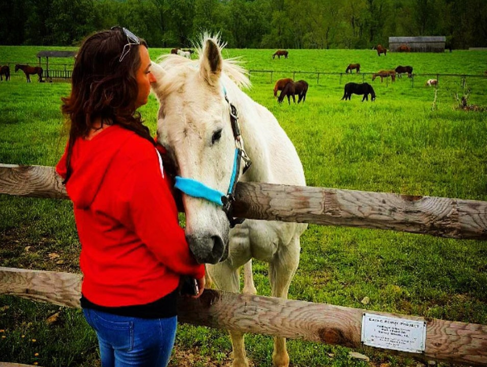 Ryerss Farm For Aged Equines. Linden Pennsylvania United States