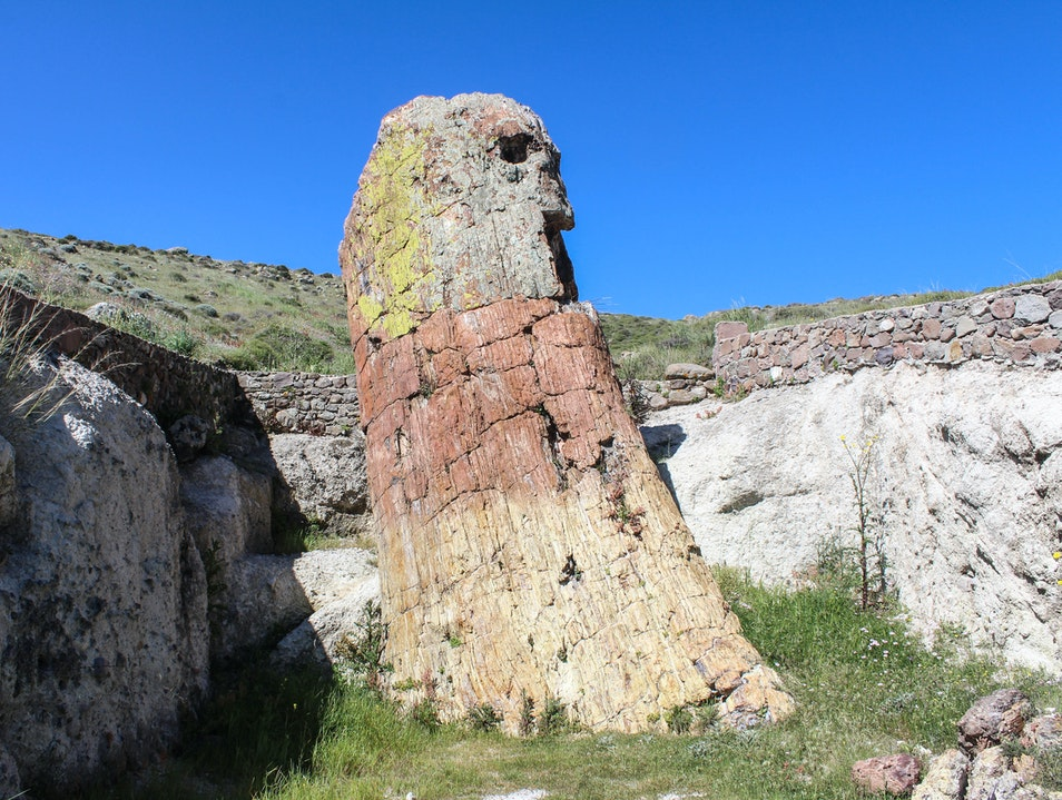 The 20-Million-Year-Old Petrified Forest on Lesbos Lesbos Prefecture  Greece