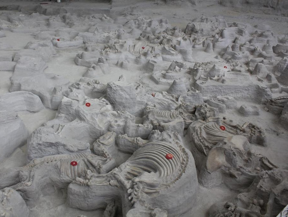 12-Million-Year-Old Snapshot: Ashfall Fossil Beds