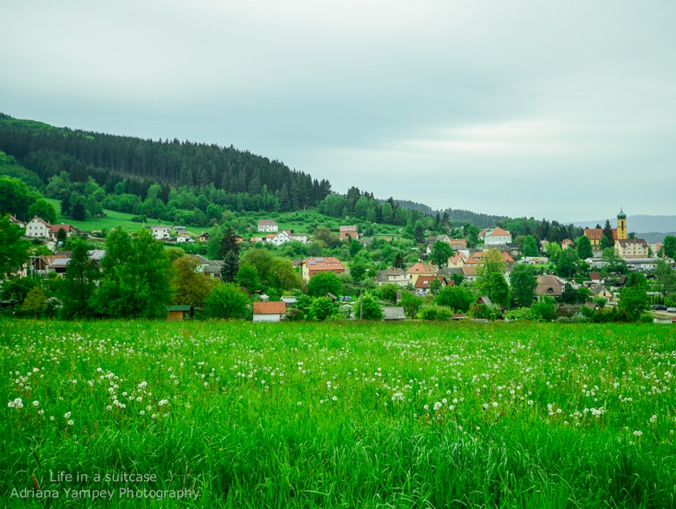 A sea of green Cesky Krumlov  Czech Republic