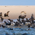 Pelican Point Walvis Bay  Namibia