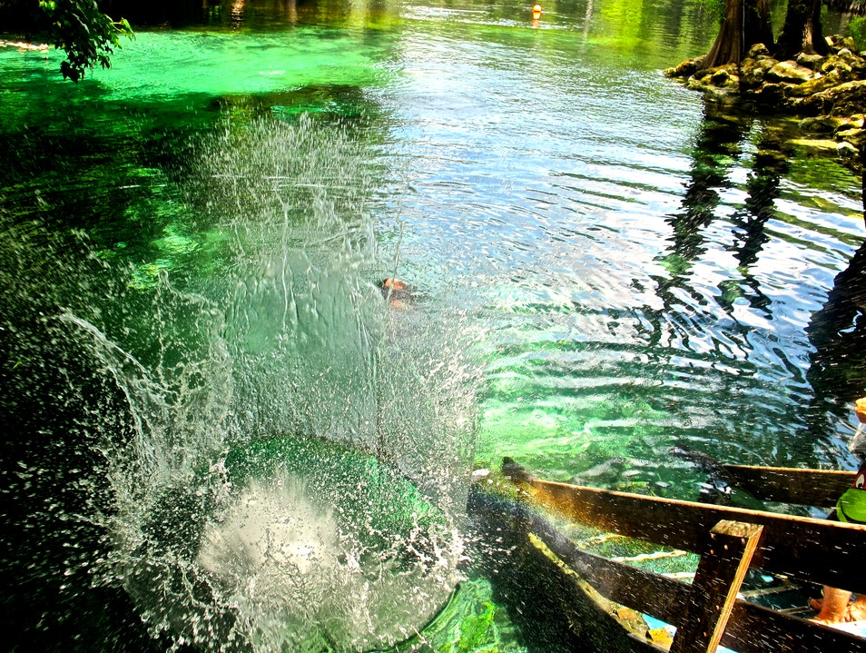 Florida's Natural Waterpark  High Springs Florida United States