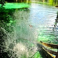 Ginnie Springs High Springs Florida United States