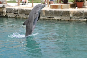 National Museum of Bermuda and Dolphin Quest