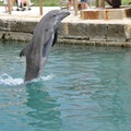 National Museum of Bermuda and Dolphin Quest   Bermuda