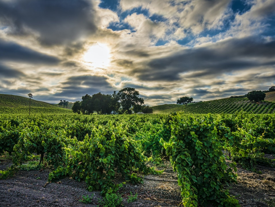 A Road for the Wanderers (and Wine Lovers) Paso Robles California United States