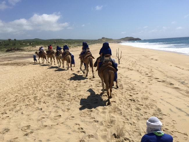 Camel riding along the beach in Cabo