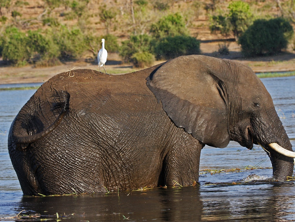 Chobe National Park   Namibia