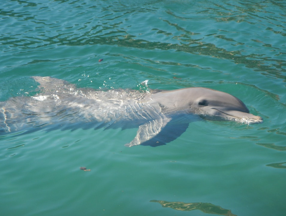 Riviera Maya-Puerto Aventuras is a such a beautiful place to swim with dolphins all natural and food is included