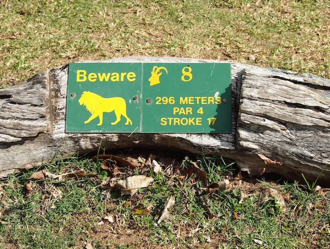Golfing with Hippos and Lions in Kruger National Park