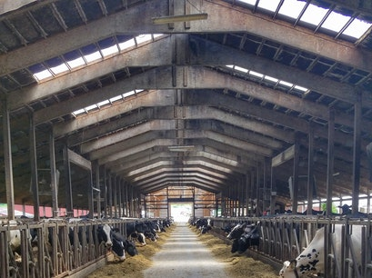 A. Ooms & Sons Dairy Farm Valatie New York United States