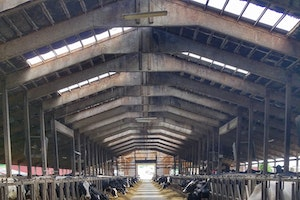 A. Ooms & Sons Dairy Farm