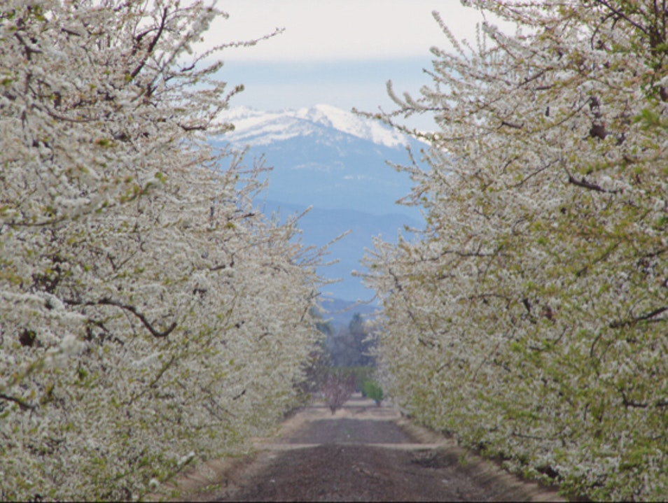 On the Blossom Trail Reedley California United States