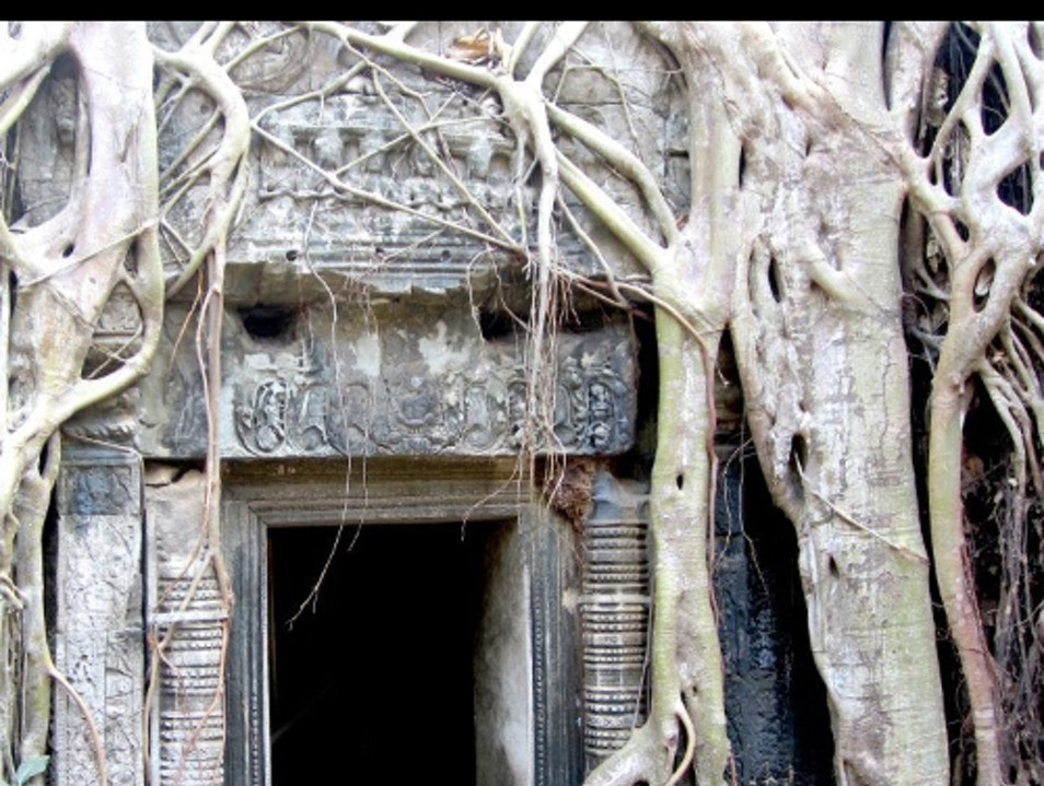 Ta Prohm And Amazing Siem Reap  Cambodia