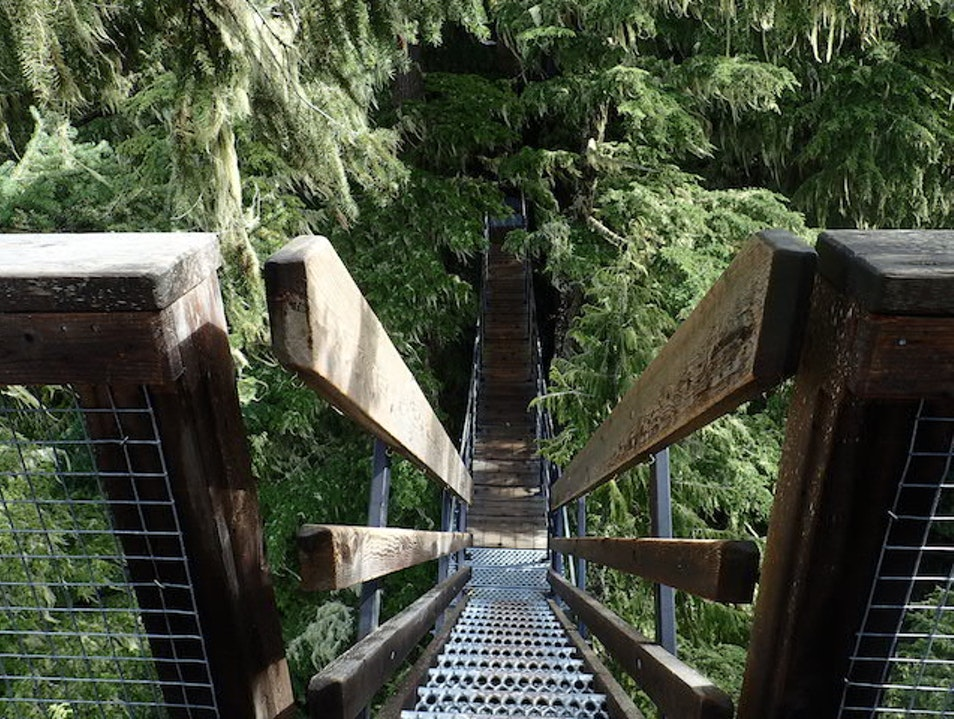 Zip Through the Forest on an Eco Tour Whistler  Canada
