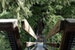 Zip Through the Forest on an Eco Tour