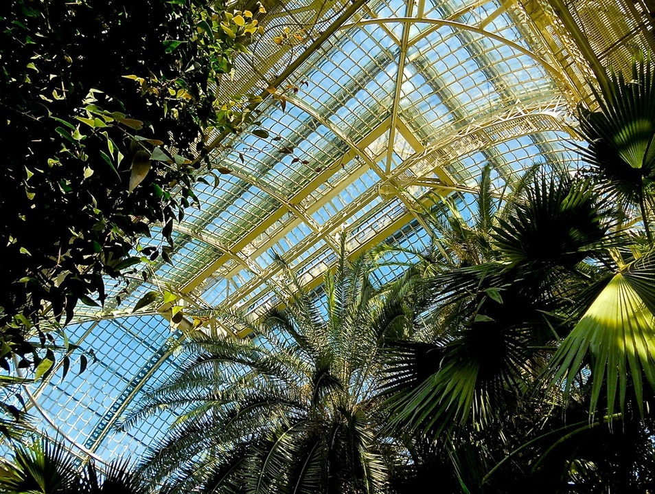 At opulent Schönbrunn Palace, tucked away past the zoo, is the peaceful and reflective Palmengarten (Palm Garden)
