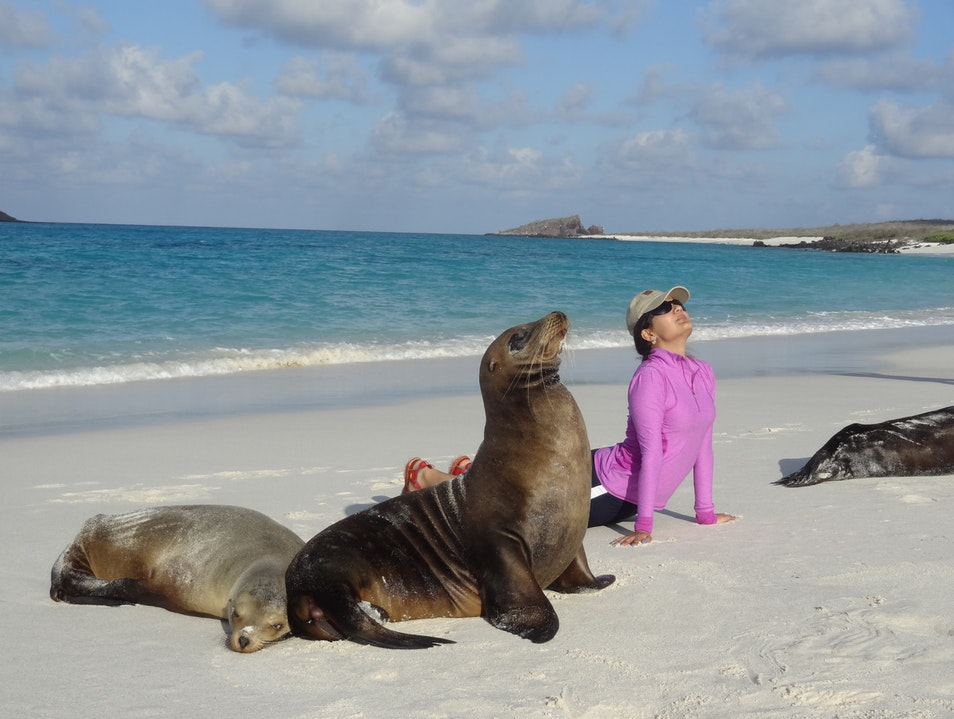 Do yoga with sea lions Galápagos Islands  Ecuador