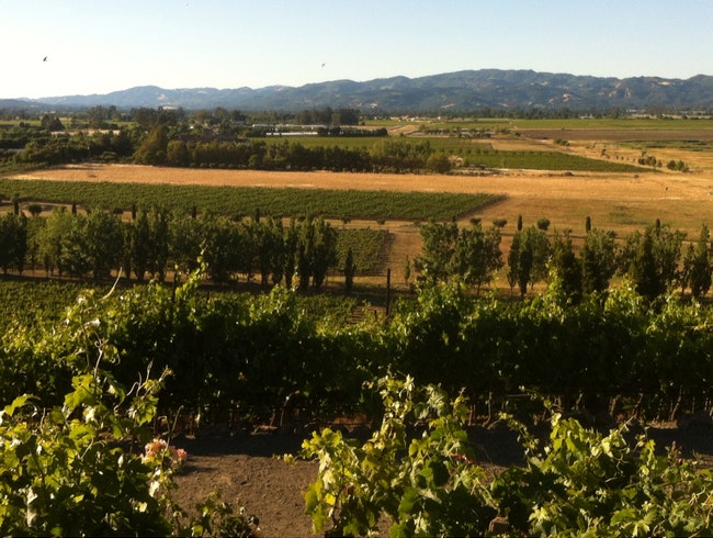 A Late Afternoon In Sonoma