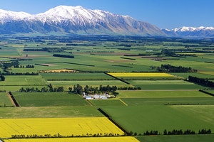 Canterbury Plains by Train