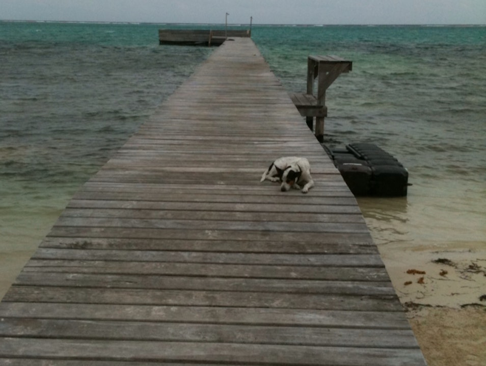 All You Need To Know About Ambergris Caye