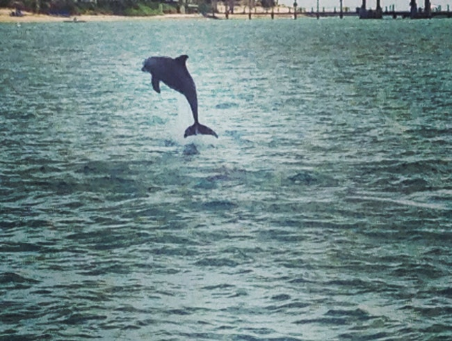 A Key West Dolphin Safari