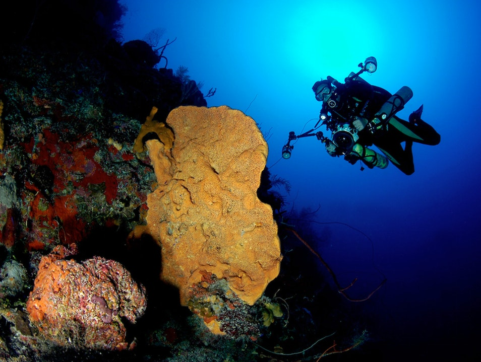 Top Dive Spots: Little Cayman's Bloody Bay Wall   Cayman Islands