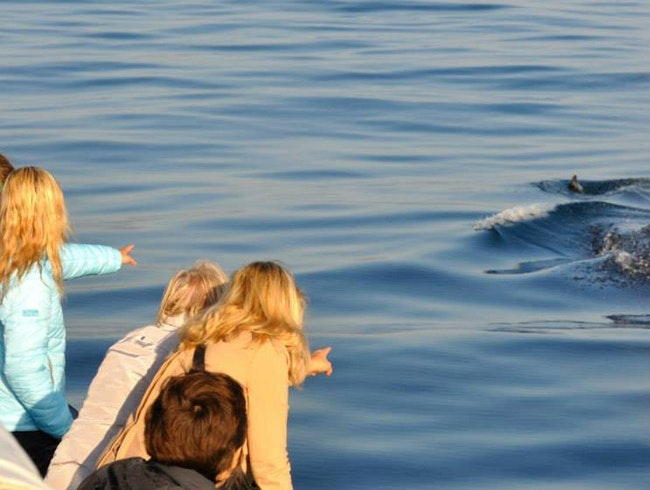 Sailing With Southern Right Whales
