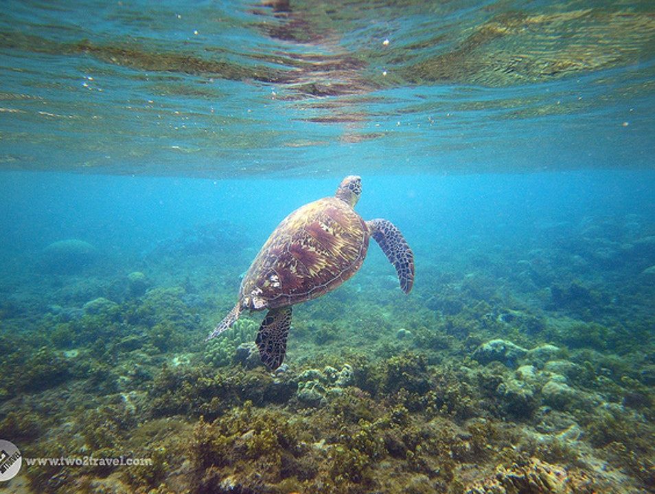 Swim with sea turtles in Apo Island, Philippines Dauin  Philippines