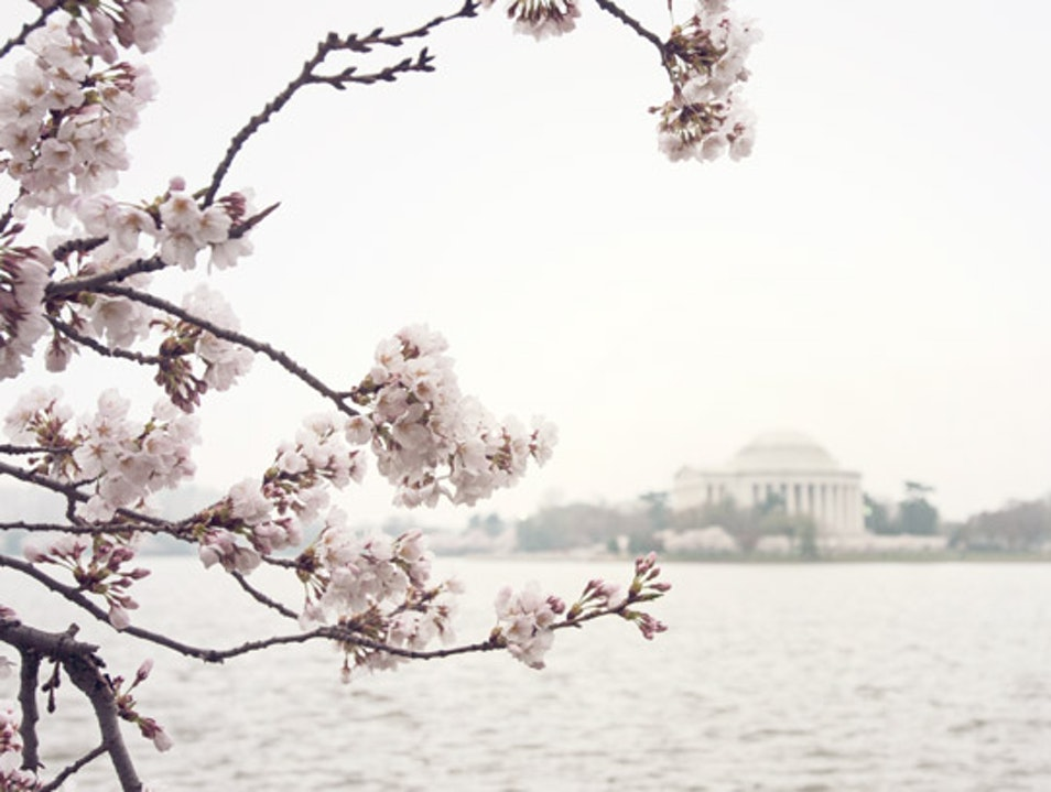 Cherry Blossoms at DC's Tidal Basin Washington, D.C. District of Columbia United States