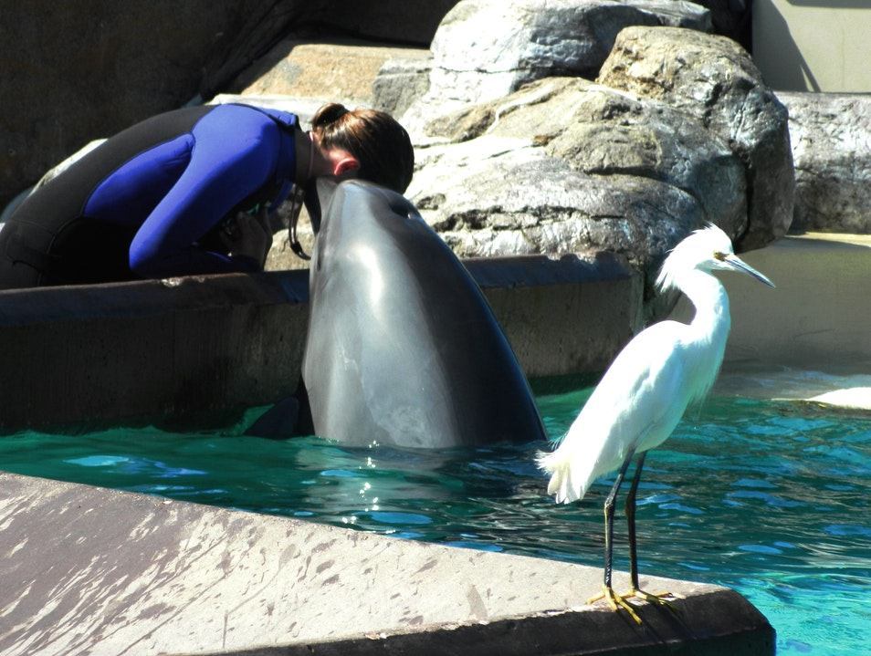 Experience dolphins up close and personal in San Diego