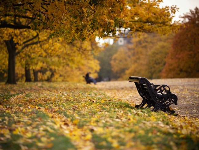 Stroll & Relax in Hyde Park