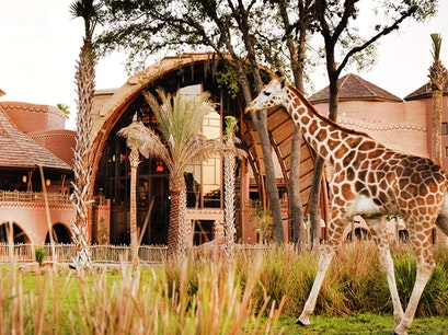 Disney's Animal Kingdom Lodge Orlando Florida United States