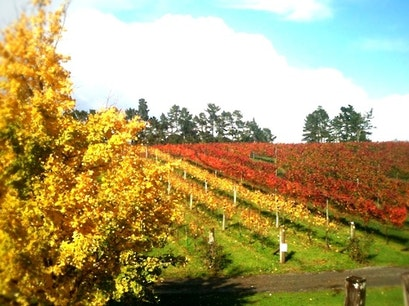 Coopers Creek Vineyard Kumeu  New Zealand