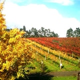 Coopers Creek Vineyard
